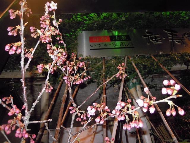 DSCN2087春の花.jpg